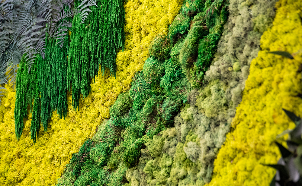The BioMed Center Moss Wall